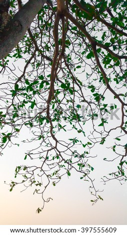 Trees blurred background branches tailored to black. And customize the color the sky is the color scheme . - stock photo