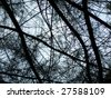 Trees branches abstract background - stock photo
