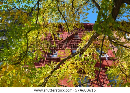 Trees, Brooklyn, New York City