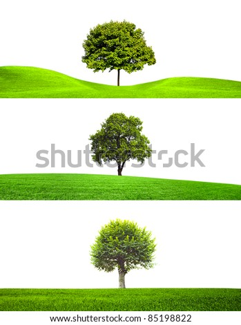 Trees collection - stock photo