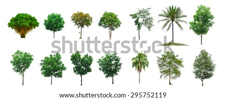 Trees Collection on white isolate background (clipping path) - stock photo