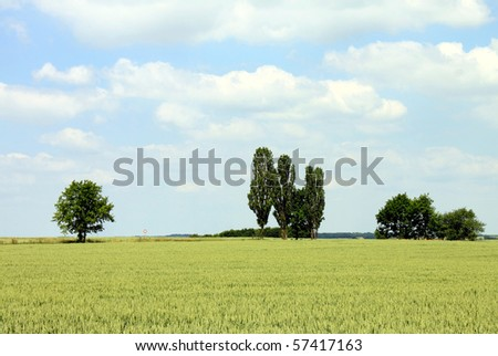 trees cornfield and cloudy blue sky - stock photo
