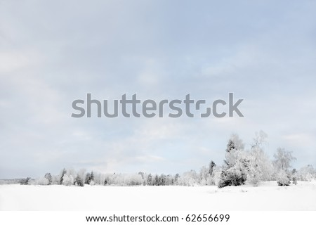 Trees covered in hoar frost - stock photo