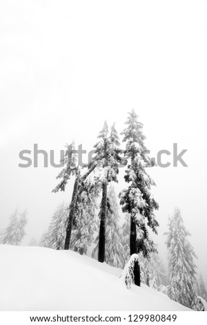 Trees covered in snow in winter