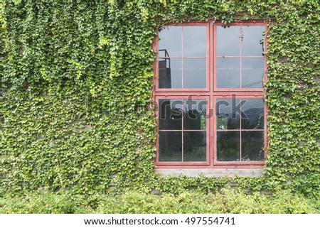 Trees covered with antique the red window frame of bodegas