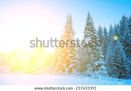 Trees covered with hoarfrost and snow - stock photo