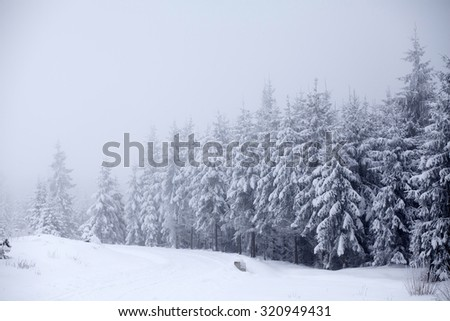 Trees covered with hoarfrost and snow in mountains - stock photo