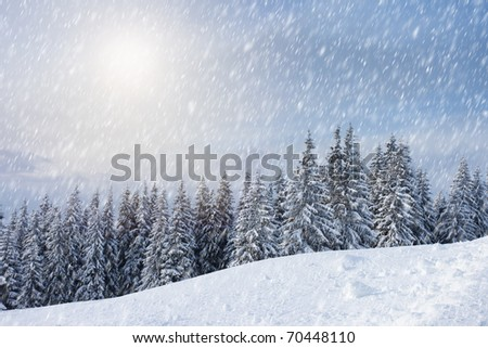 Trees covered with hoarfrost and snow in mountains. - stock photo