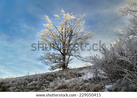 Trees covered with hoarfrost on a glade in winter