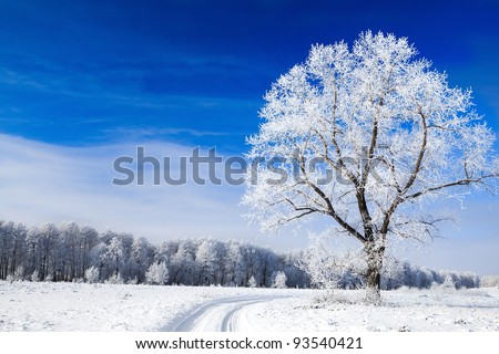 Trees covered with snow against the sky - stock photo