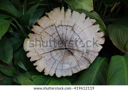 Trees cut - stock photo