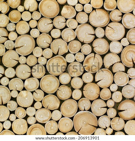 Trees cut section for background texture - stock photo