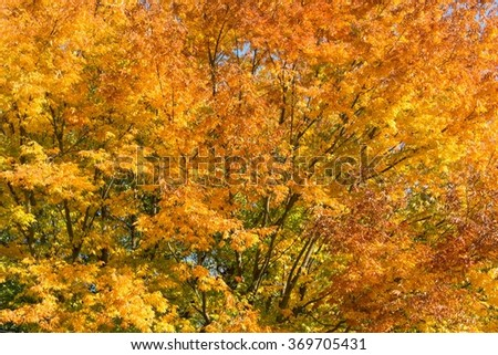 Trees during bright autumn day - stock photo