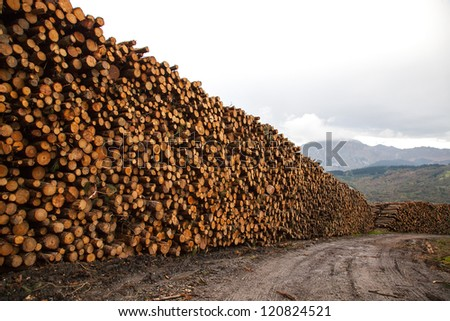 trees felled and stored for the industry - stock photo