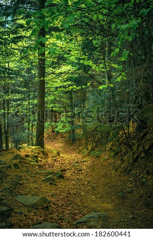 trees, foliage, rocks and trail in spring forest - stock photo