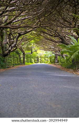 trees,forest,nature,road,new caledonia,isle of pines,island,heaven,beautiful,green,silhouettes,street ,weave,shadow,lovely,light,sun ,fresh ,together
