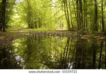 trees from a green forest reflecting in water - stock photo