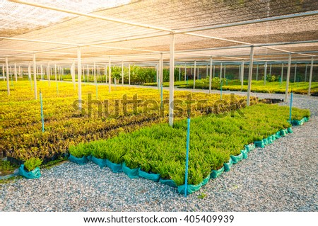 Trees garden in greenhouse. - stock photo