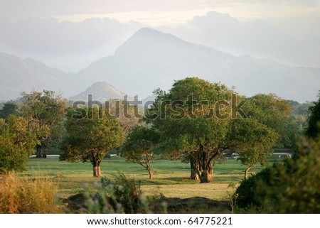 Trees growing in an area known as The Elephant Corridor, with the Kandalama Hills in the background, North Central Province, Sri Lanka.