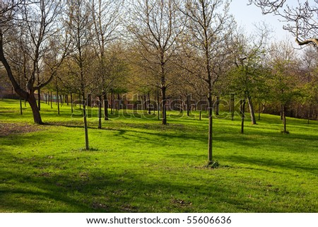trees growing in the park