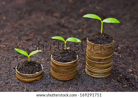 trees growing on coins / csr / sustainable development / economic growth /  trees growing on stack of coins / corporate social responsibility - stock photo