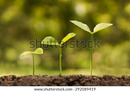 trees growing on fertile soil in germination sequence / growing plants / plant growth - stock photo