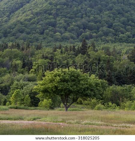 Trees, Hills in the countryside of Cape Breton Island in Nova Scotia Canada. - stock photo