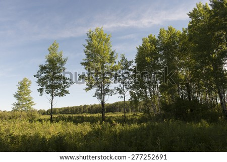 Trees in a field, Riding Mountain National Park, Manitoba, Canada - stock photo
