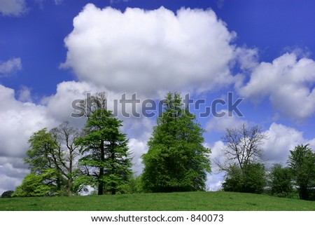Trees in a field with a blue sky and puffy white clouds. - stock photo
