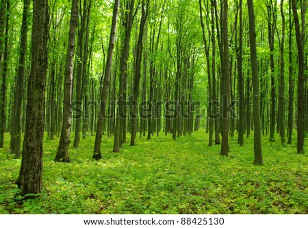 Trees in a forest - stock photo
