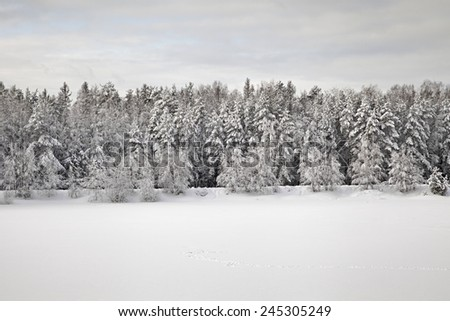 Trees in a forest covered with thick snow in winter - stock photo