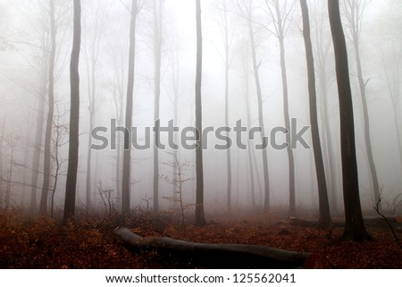 Trees in a forest with fog and autumn leaves on the ground - stock photo