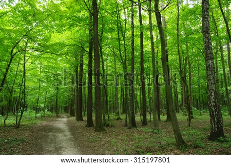 Trees in a green forest  - stock photo