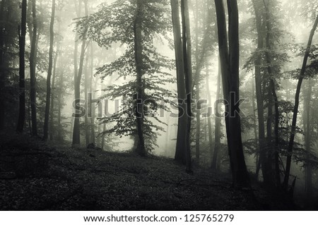trees in a green forest with forest - stock photo