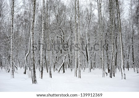 Trees in a park covered with fresh snow. - stock photo
