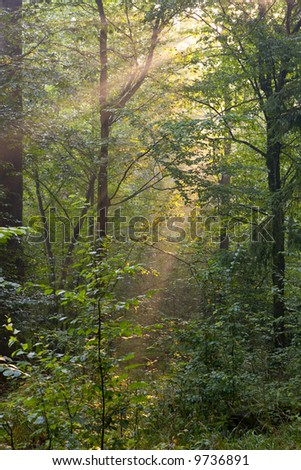 Trees in a soft early morning light, deciduous forest