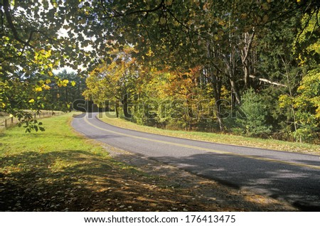 Trees in autumn color line a narrow road near Woodstock, New York