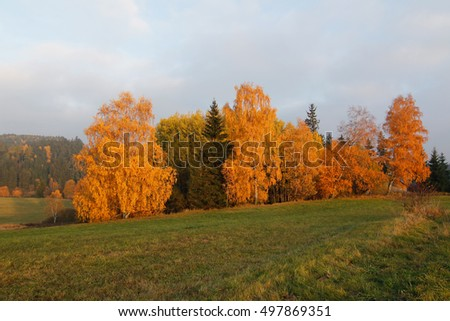 Trees in autumn - colorful autumn
