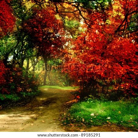 Trees in autumn park - stock photo