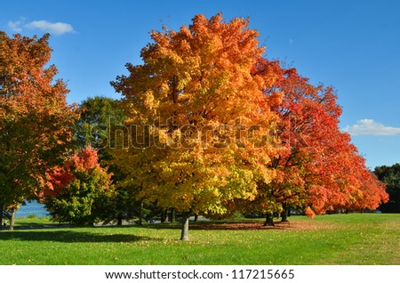 Trees in autumn with all colors of red orange and yellow leaves - stock photo