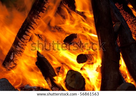 trees in fire at night - stock photo