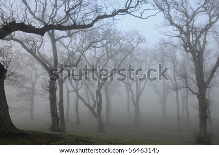trees in fog - stock photo