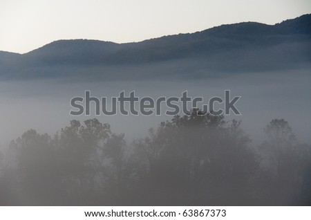trees in fog and mountains - stock photo