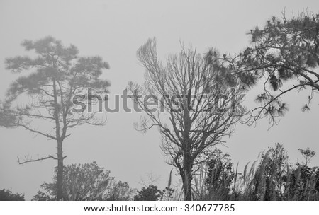 Trees in fog at the forest in Bokor, Cambodia. - stock photo
