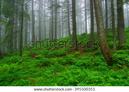 Trees in forest and fog