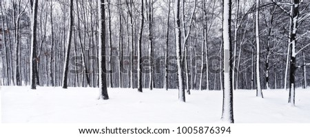 Trees in forest covered with fresh snow during snowfall. Oak trees, winter landscape, relaxing winter nature, panoramic photo. Central Europe, january 2018.
