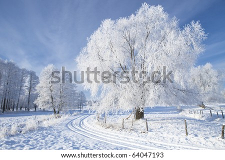 Trees in frost and landscape in snow against blue sky. Winter scene. - stock photo