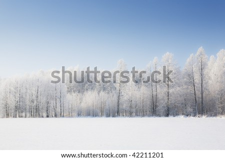 Trees in frost and landscape in snow and blue sky. Winter scene.