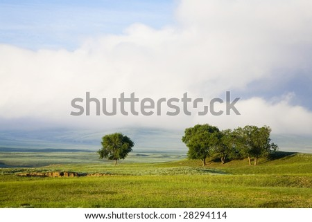 trees  in grassland  ,in the daytime - stock photo
