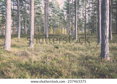 trees in green forest with moss and autumn colors. latvia. - retro, vintage style look - stock photo